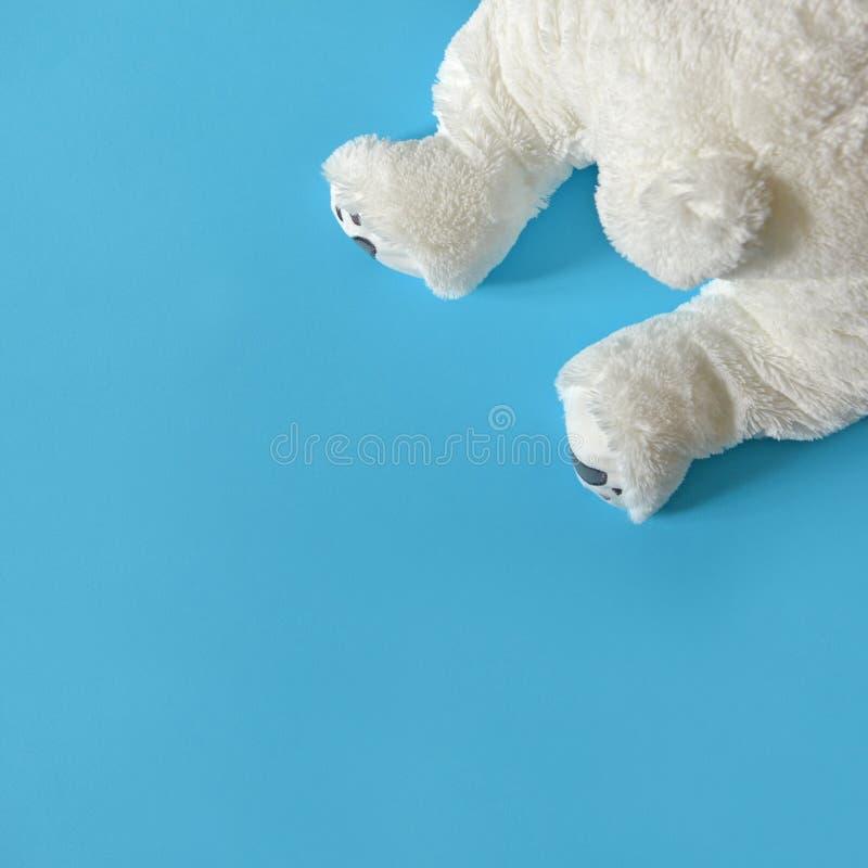 Gulliga fluffiga björnben som når en höjdpunkt från hörn på vit bakgrund - bästa sikt fotografering för bildbyråer