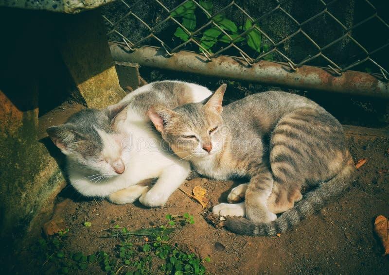 gulliga katter royaltyfri fotografi