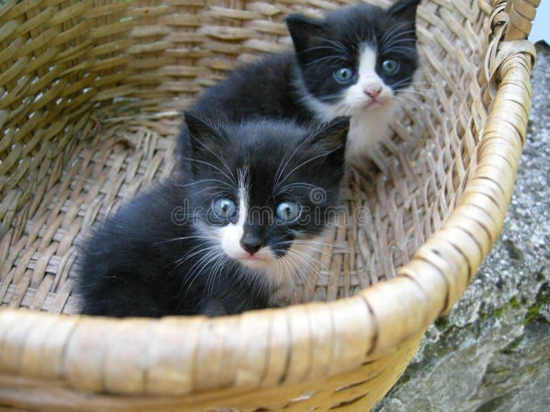 gulliga kattungar för korg arkivbilder
