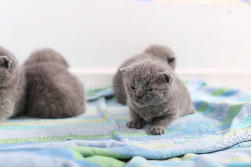 Gulliga lilla kattungar fotografering för bildbyråer