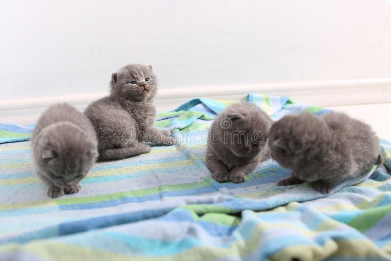 Gulliga lilla kattungar royaltyfria bilder