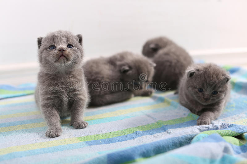 Gulliga lilla kattungar arkivfoton