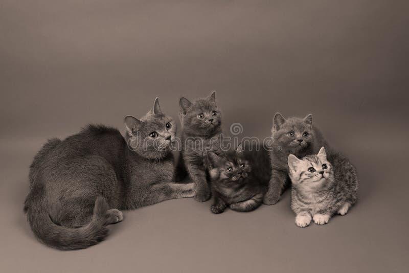 Gulliga lilla kattungar royaltyfri fotografi