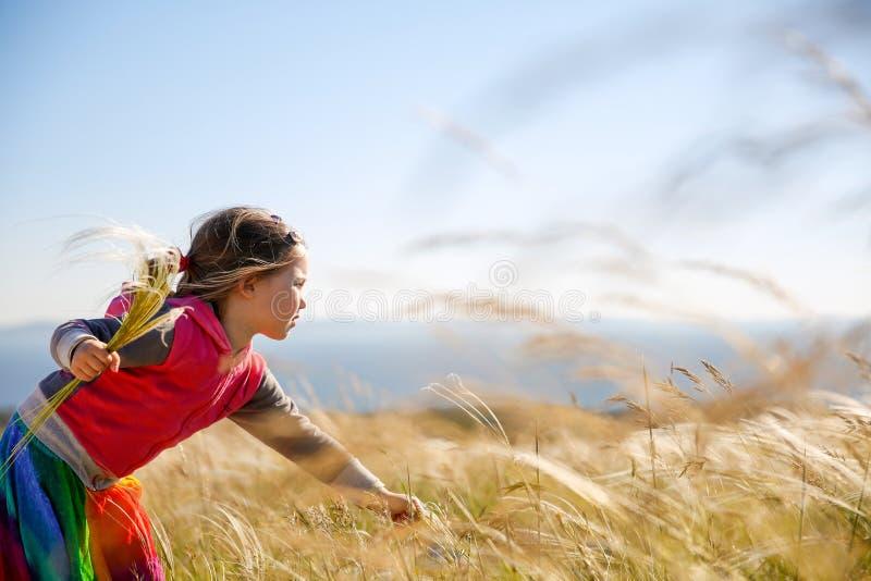 Gulliga liten flickaplockninggräs arkivfoton