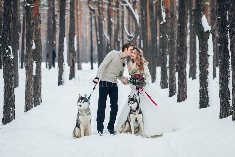 Gulliga par med två siberian skrovligt poseras på bakgrund av snöig skogvinterbröllop artistically royaltyfri foto