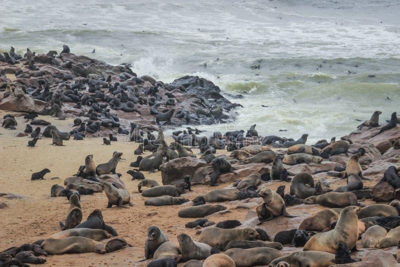 Gulliga skyddsremsor stojar på kusterna av Atlanticet Ocean i Namibia arkivbilder