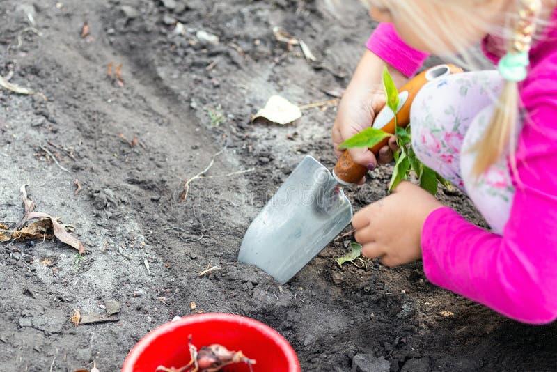 Gulliga små behandla som ett barn flickan som planterar tulpankulaplantor Trädgårdsmästarebegrepp för litet barn Utomhus- barnakt fotografering för bildbyråer