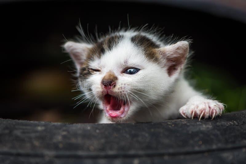 Gulliga små behandla som ett barn katten arkivbild