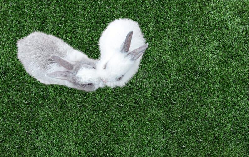 Gulliga små behandla som ett barn påskkaninen (vit och Gray Rabbit) som kysser i hjärta som Shape på gräs i parkera på hörnet royaltyfria foton