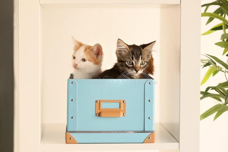 Gulliga små kattungar i ask på hylla royaltyfria bilder