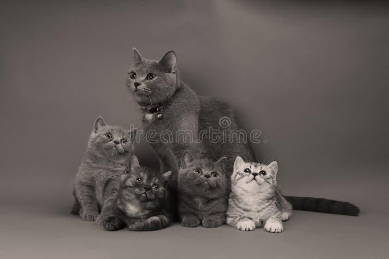 Gulliga små kattungar med modern royaltyfria foton