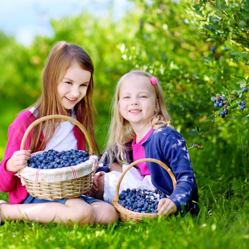 Gulliga små systrar som väljer nya bär på organisk blåbärlantgård royaltyfri foto