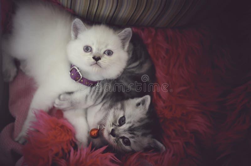 Gulliga strimmig kattkattungar som sover, spelar och kramar i en korg arkivfoto