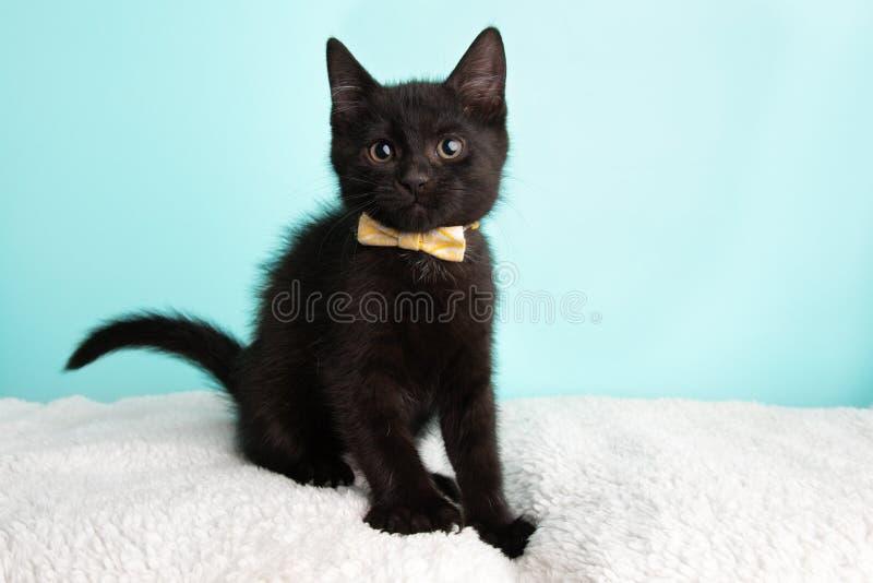 Gulliga unga svartvita Cat Kitten Rescue Wearing White och gult flugasammanträde som ser till vänstersidan arkivbild