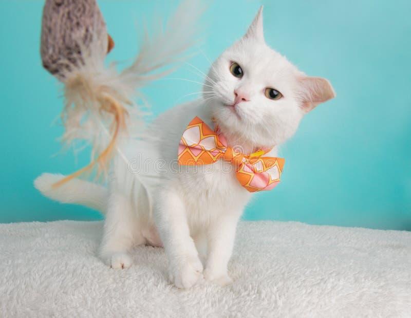 Gulliga unga vita Cat Wearing Orange Pink och vit geometrisk flugadräktstående som spelar med Toy Shaking Head arkivbild