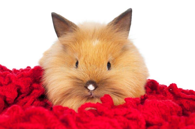 Gulligt behandla som ett barn isolerad kanin arkivfoton
