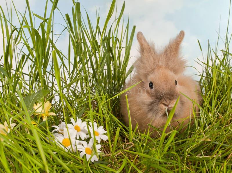 Gulligt behandla som ett barn kanin i gräs arkivbilder