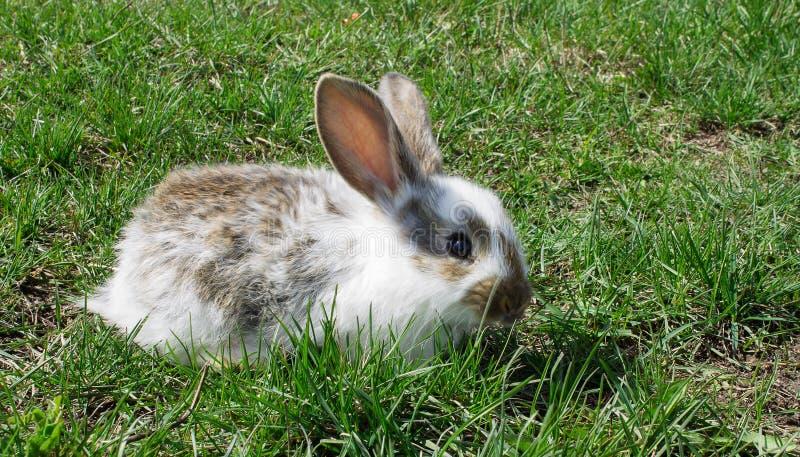 Gulligt behandla som ett barn kanin på grönt gräs royaltyfria bilder