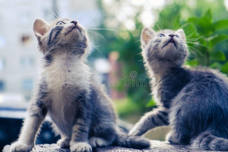 Gulligt husdjur för kattungekattvilsekommet djur bara härligt royaltyfria bilder