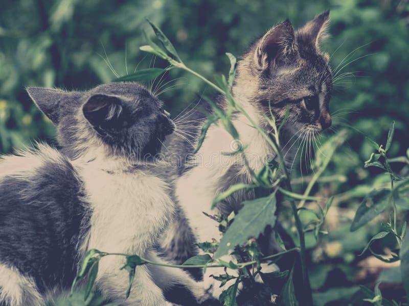 Gulligt husdjur för kattungekattvilsekommet djur förtjusande fattigt fotografering för bildbyråer