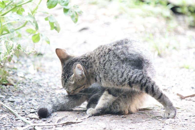 Gulligt husdjurkatthus royaltyfria foton
