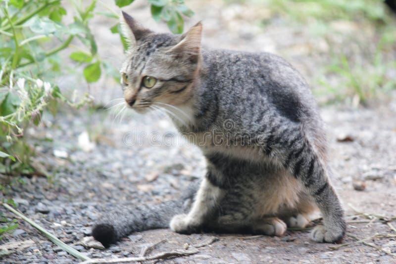 Gulligt husdjurkatthus royaltyfri bild