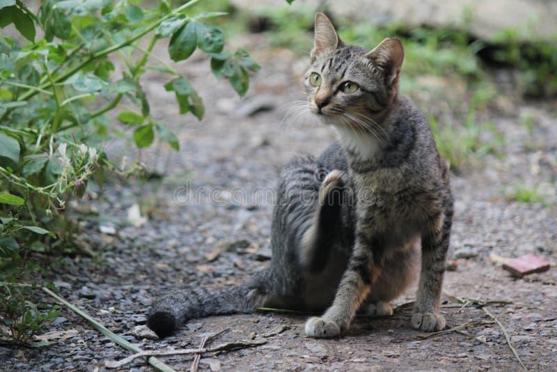 Gulligt husdjurkatthus arkivfoton