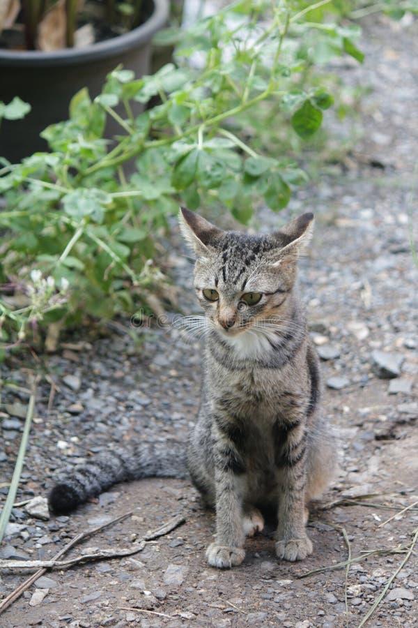 Gulligt husdjurkatthus arkivfoto