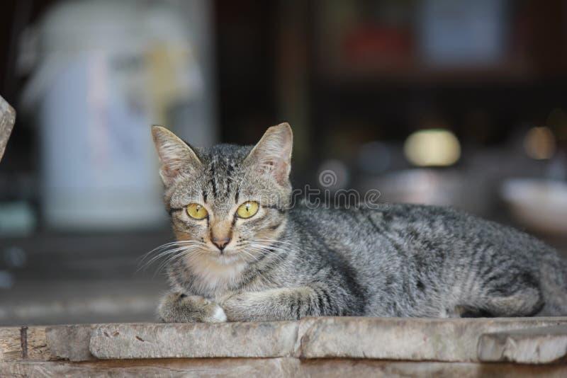 Gulligt husdjurkatthus royaltyfri foto