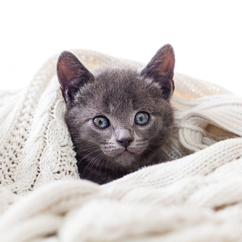 Gulligt kattungenederlag i en stucken filt royaltyfri fotografi