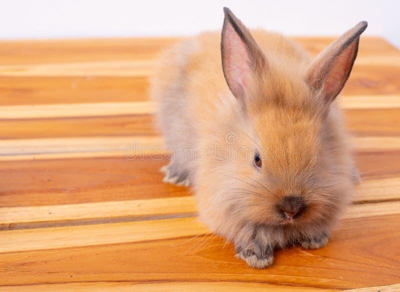 Gulligt litet brunt kanin- eller kaninstag på trätabellen med vit bakgrund royaltyfri foto