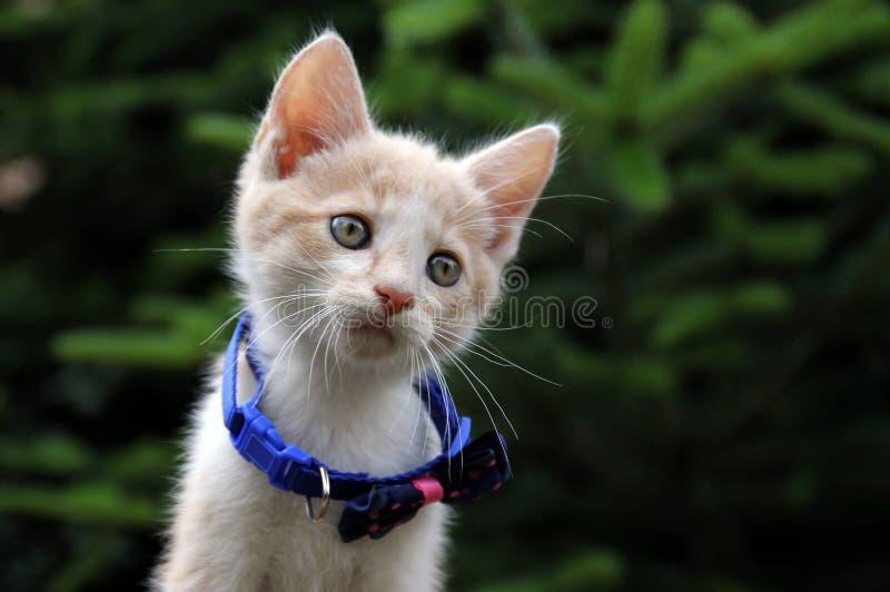 Gulligt r?tt spela f?r katt royaltyfria bilder