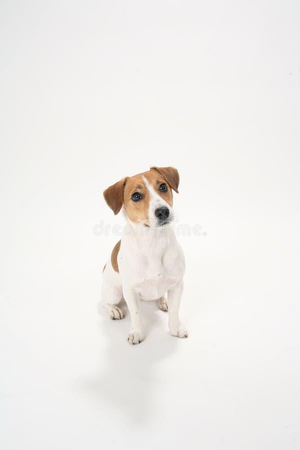 Gulligt roligt hundhusdjur royaltyfri bild