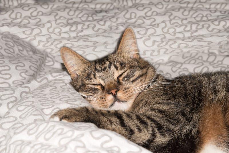 Gulligt roligt kattslut upp, inhemsk katt, avslappnande katt arkivfoton