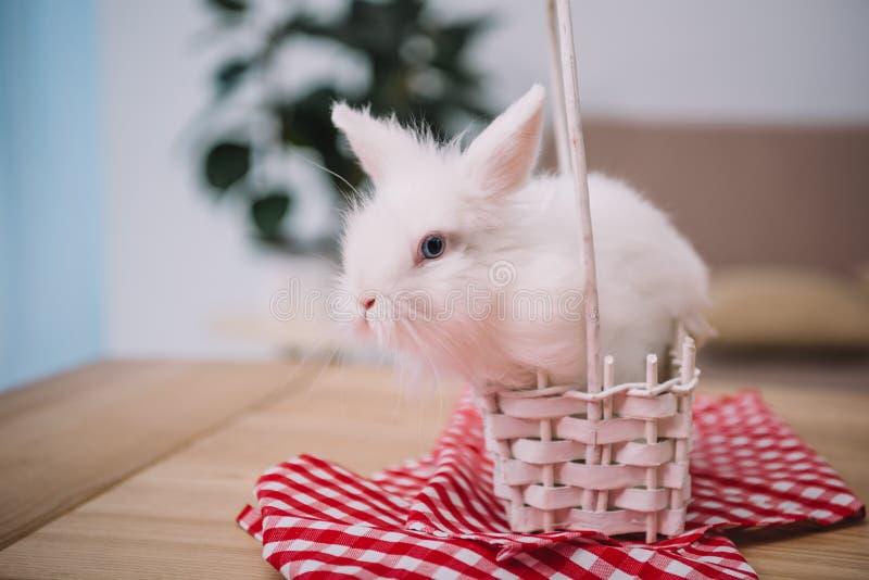 gulligt vitt easter kaninsammanträde royaltyfri fotografi