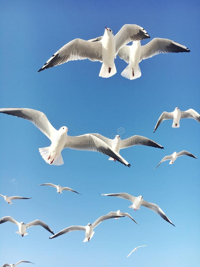 gulls foto de stock