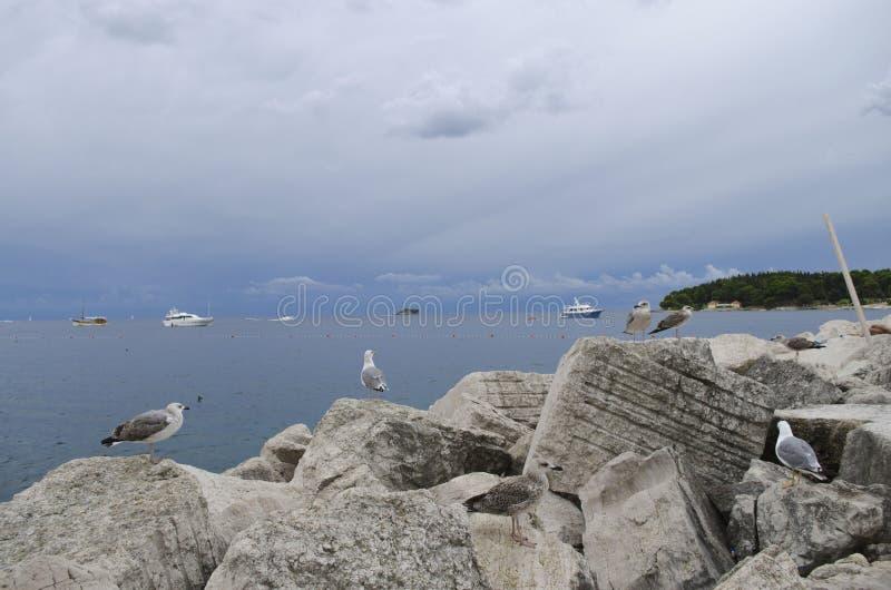 Download Gulls foto de archivo. Imagen de croatia, lari, foto - 44854256