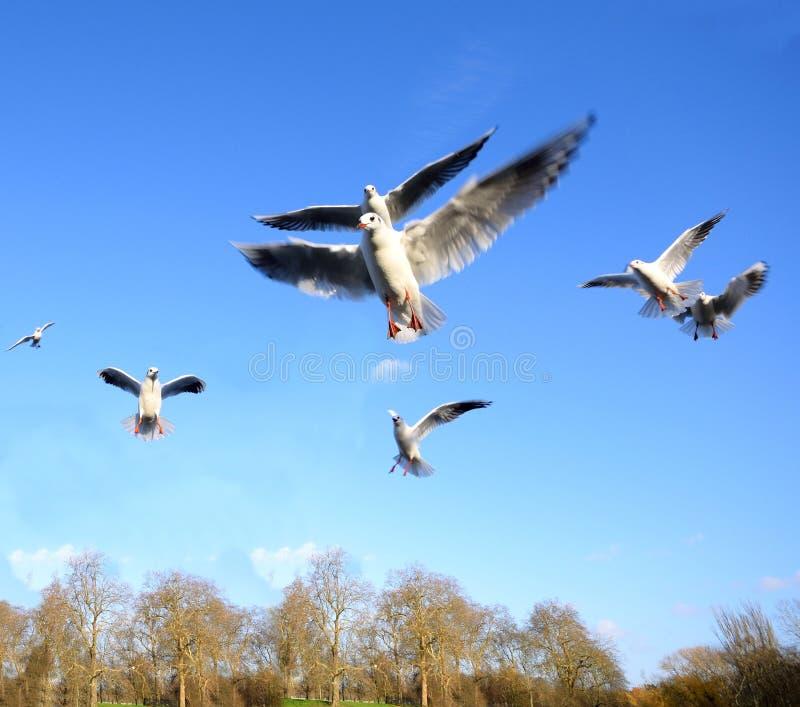 Download Gulls foto de archivo. Imagen de gaviotas, alimento, outdoor - 64207970
