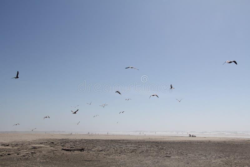 gulls fotos de archivo