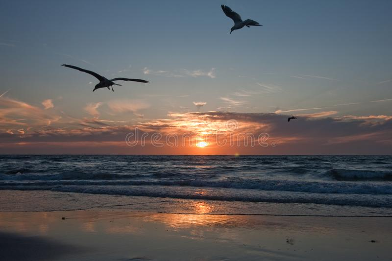 Gulls on the background of the sunset, the shore of the northern sea. Netherlands. Travels royalty free stock image