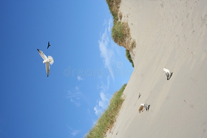 Download Gulls at a beach stock photo. Image of bird, gull, wildlife - 993536