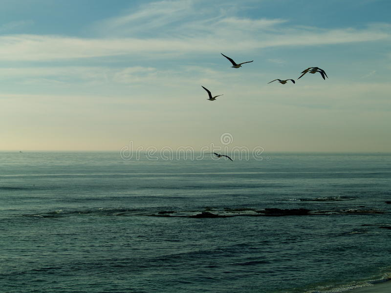 Gulls in Flight. They can be loud and a nuisance, yet they do signify that we are at the beach and the fun has begun. They can also be elegant in flight, and royalty free stock photos