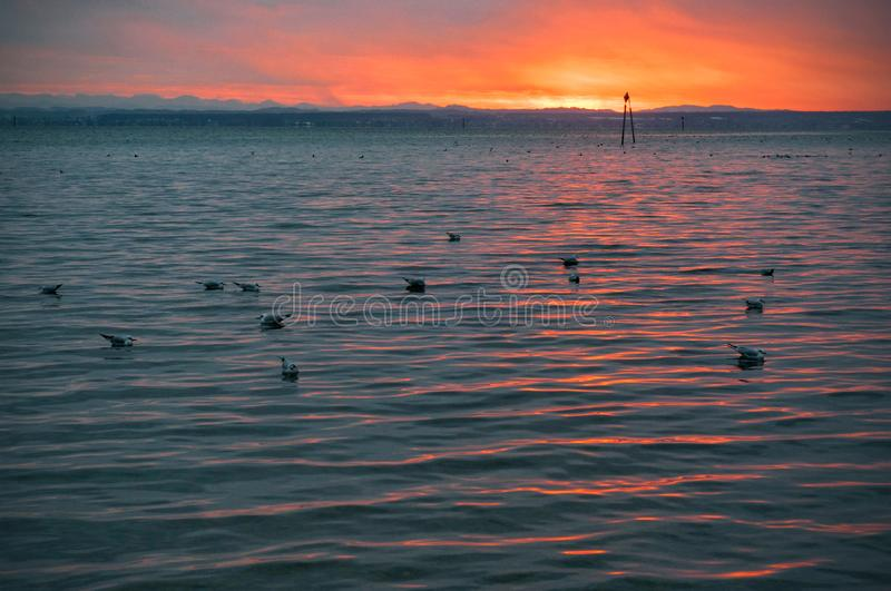 Gulls floating on the beach by the sea at sunset stock photo