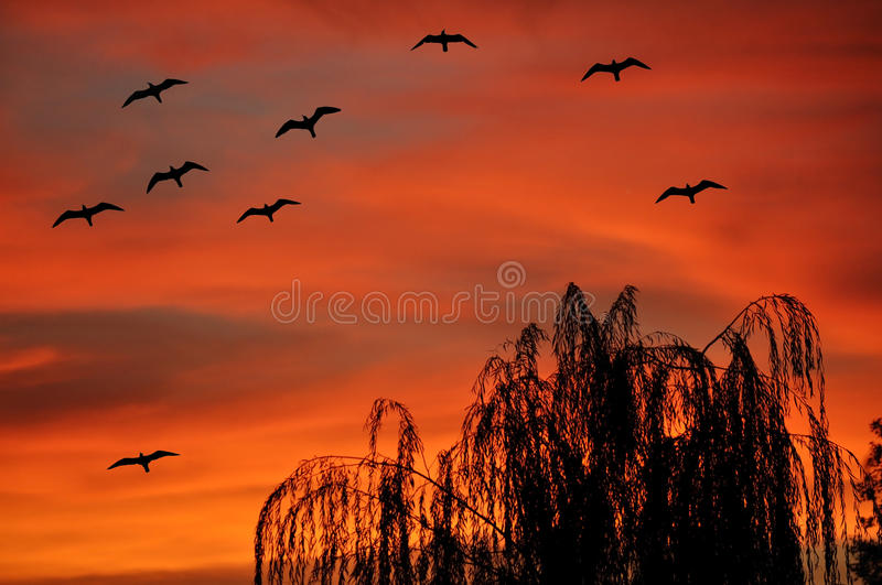 Download Gulls flying at sunset stock photo. Image of sunset, summer - 25137382
