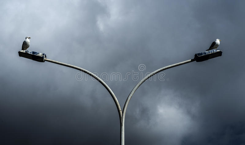 Gulls on lampposts stock images