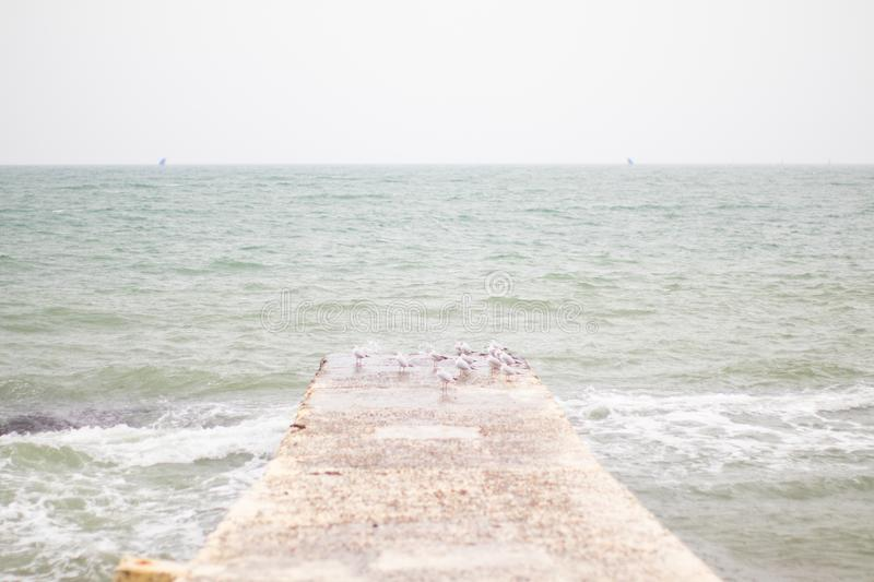 Gulls on the pier of the Black Sea in the rain royalty free stock image
