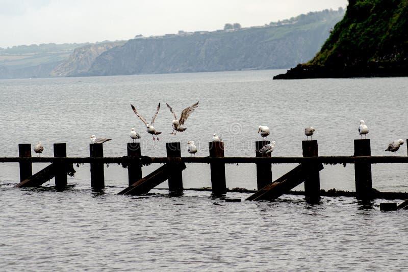 Gulls plaYng por agua de rotura fotografía de archivo libre de regalías
