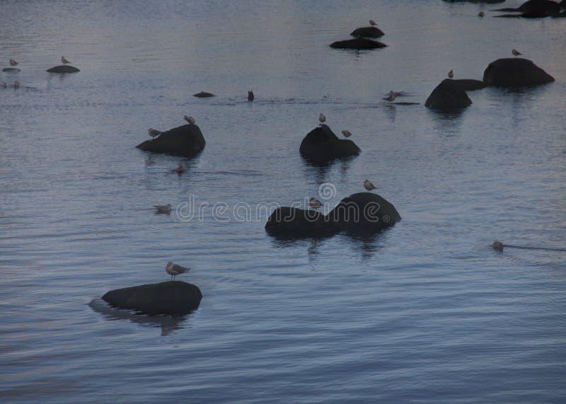 Gulls on the rocks stock photo