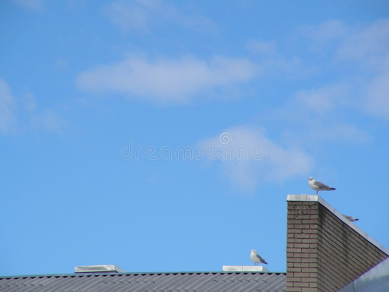 Gulls on the roof royalty free stock images