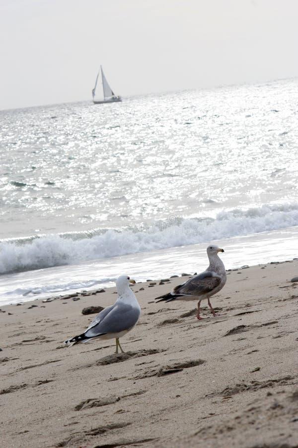 Gulls and Sailboat royalty free stock image